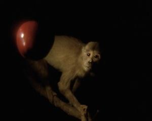 joao-maria-gusmao-_-pedro-paiv-darwins-apple-newtons-monkey-2012